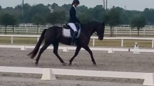 pips first level dressage